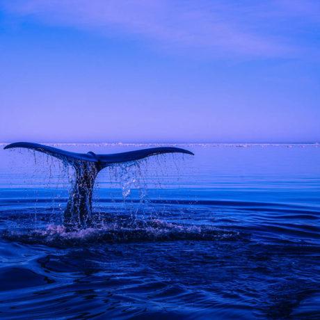 Mexiko – Tajemství Cortézova moře